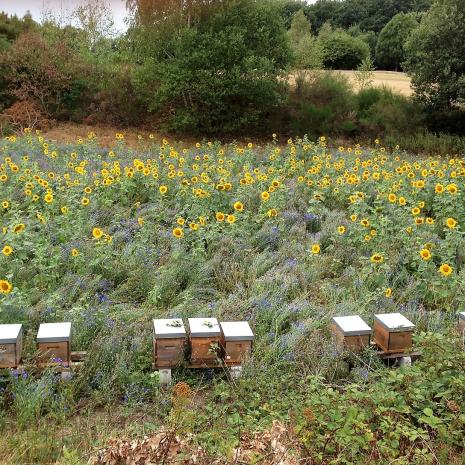 Bienenweide an Bahn 16-IMG_2535